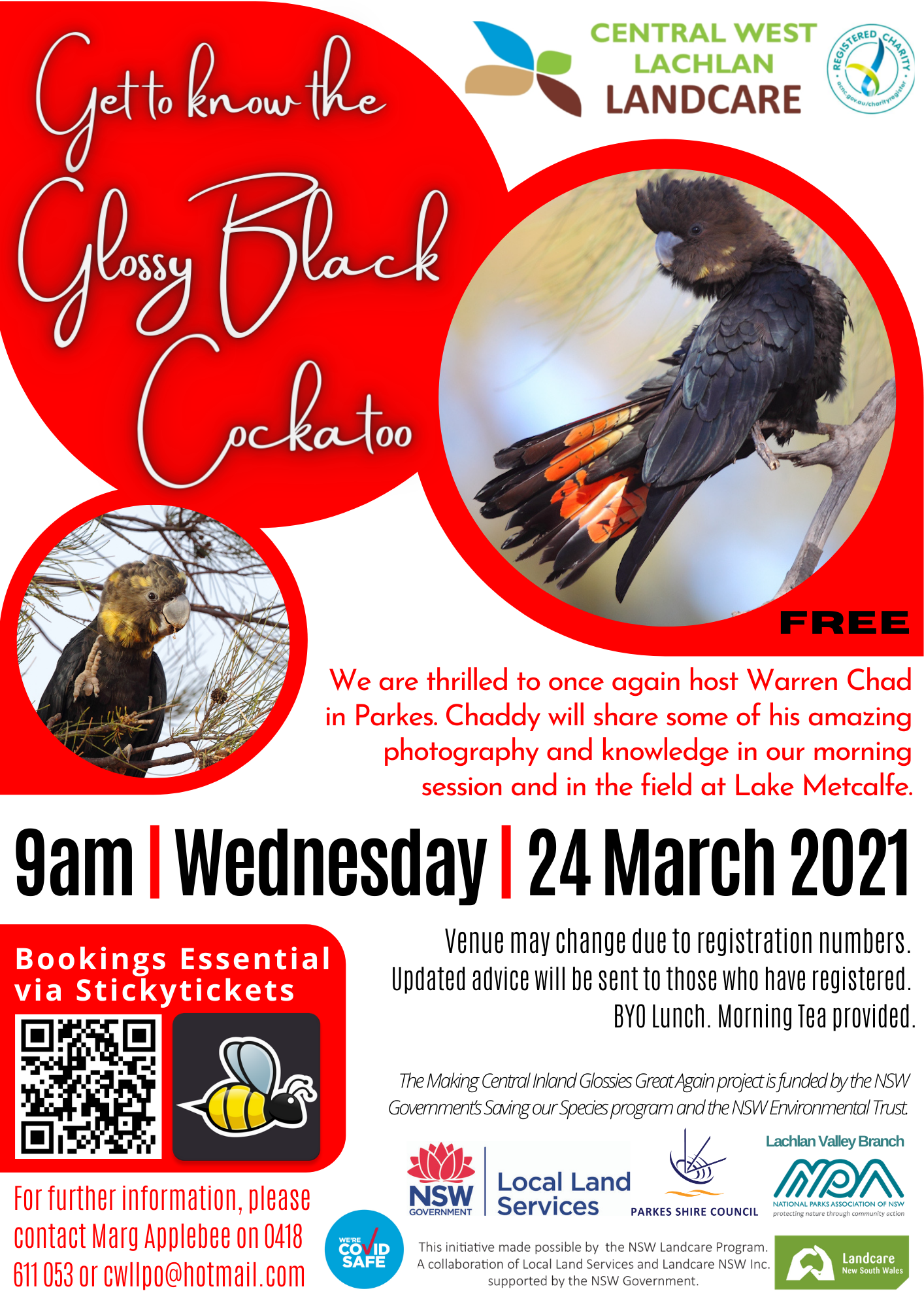 Get to Know the Glossy Black Cockatoo (24-3-2021)